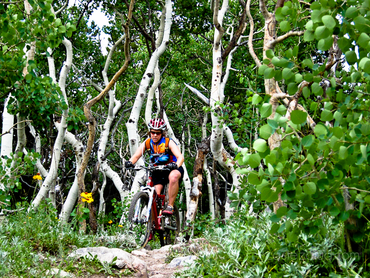 woman mountain biking in an aspen grove