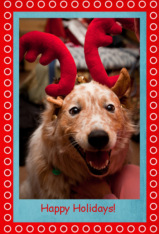 a dog with christmas antlers on his head