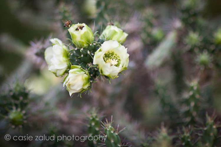 der Photographer - The Beekeeper's Lament - Denver Botanic Gardens