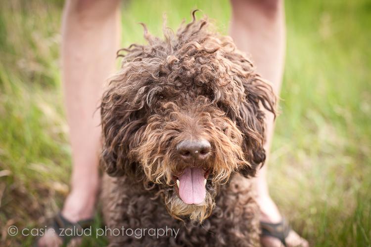 Denver Family & Pet Portrait Photographer