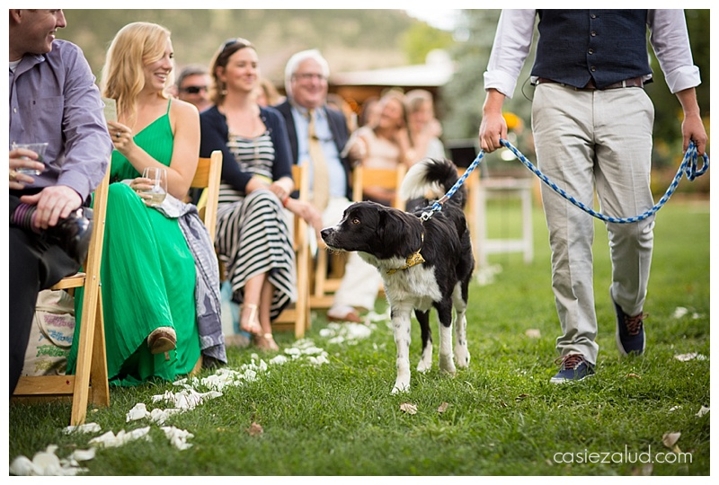 Best Wedding Dog - Lyons Farmette