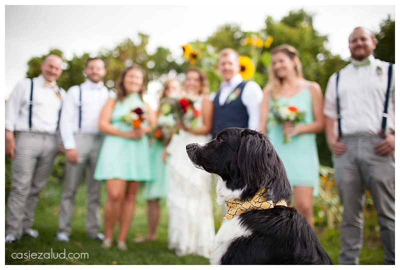 Bohemian wedding dog - The lyons Farmette