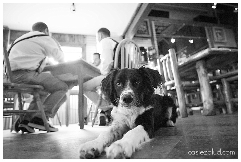 Wedding Dog - Spirit Hound Distillery Lyons, CO