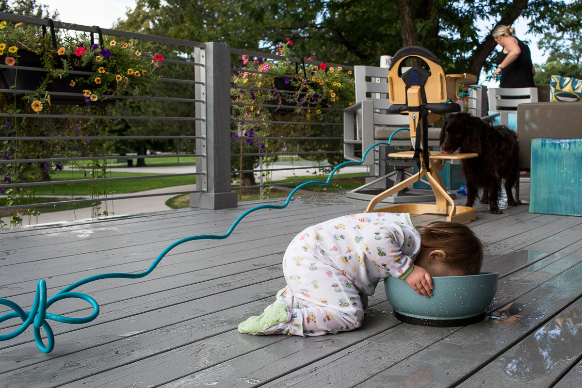 toddler drinking water out of a dog bowl as the dog in the background is licking her highchair and mom is watering her plants