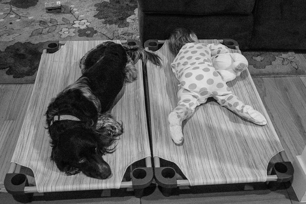 Dog and toddler asleep on dog cots side by side,