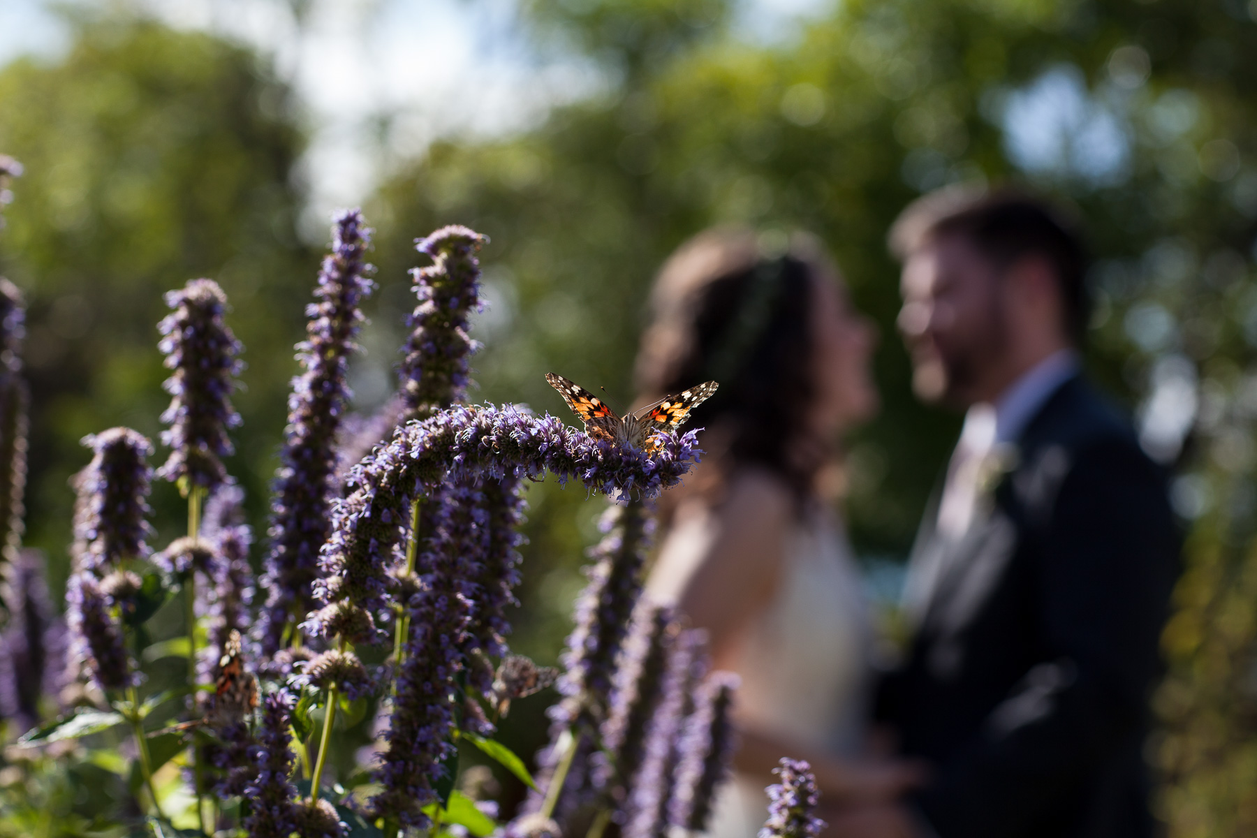 a butterfly sitting on a flower with a bride and groom in the background