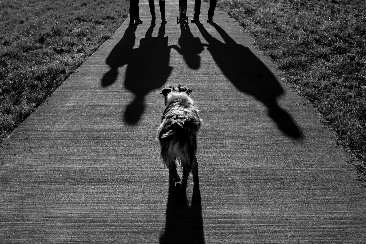 shadow of a family or four holding hands and a dog runs toward them