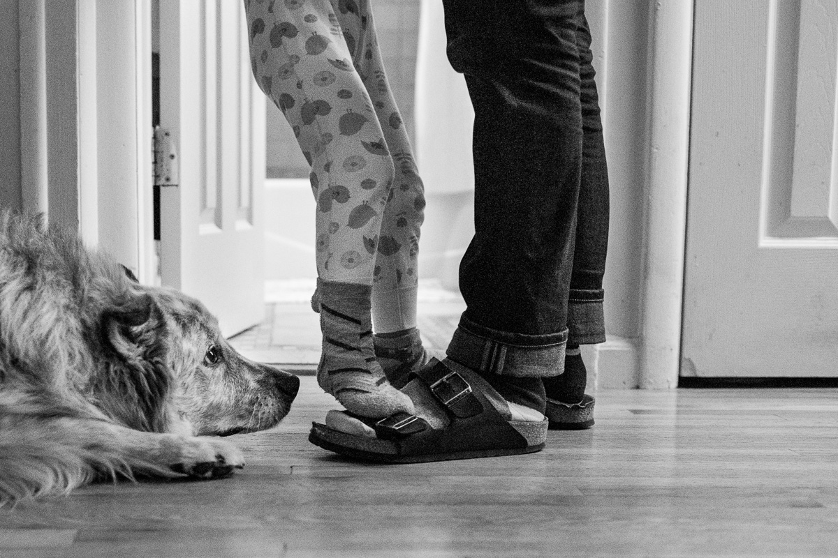 feet of child on top of adult feet with the face of a dog looking right at the feet