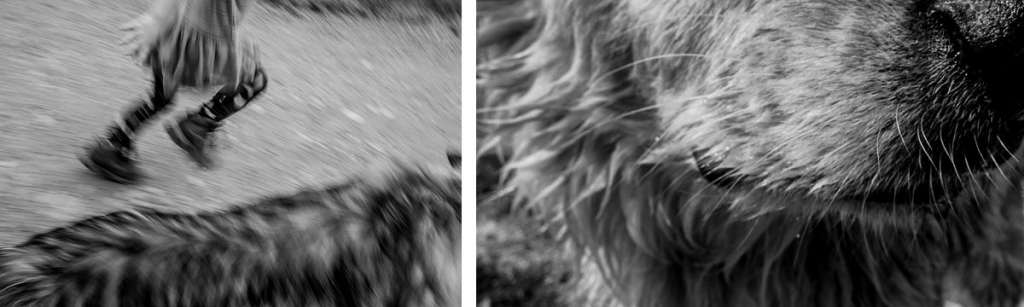 BW diptych of child running and dog face