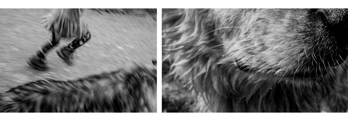 BW diptych of a girl and dog running and close up of dog snout
