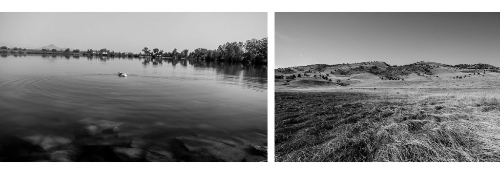BW diptych of a lake with a dog in it and pillows of blowing grass with a runner