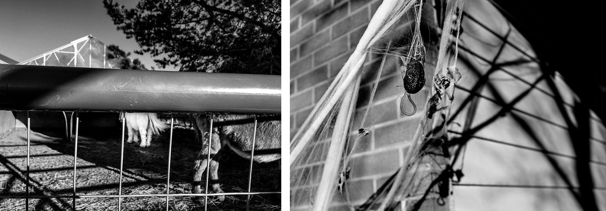 BW diptych of a scene from a farm and halloween decorations