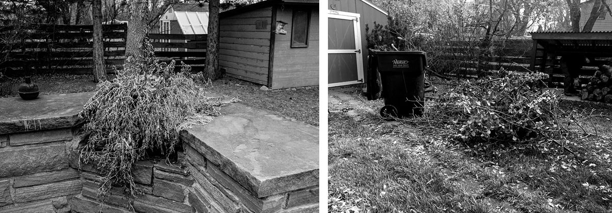 BW diptych of two backyards of dying shrubs