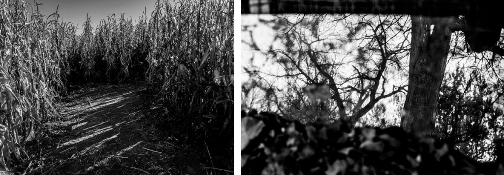 Bw diptych of corn field and tree in a mirror