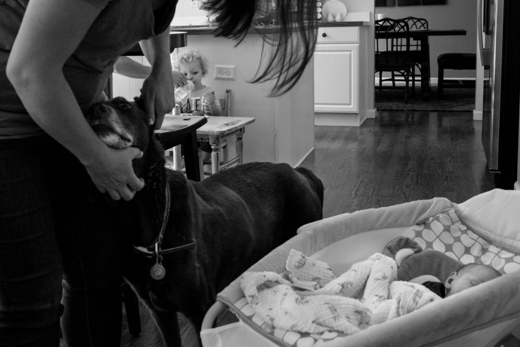 mom gives family dog some love while dad tries to feed toddller and newborn sleeps in bassinet